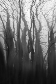 photographie-art-vincent-le-borgne-img_8414