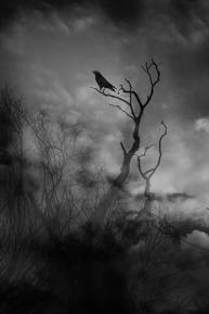 photographie-art-vincent-le-borgne-img_8425336x504